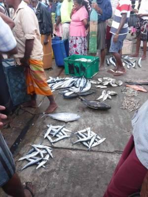 Fish Market Nichola Scrutton