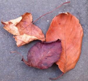 Leaves (N.Scrutton)